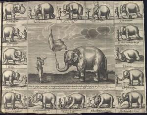 Elephant Hansken Valenciennes