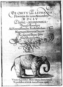 Elephant Hansken Valerio Spada 1655