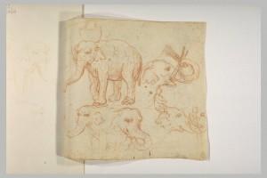 Elephant Hansken's tricks drawing Louvre