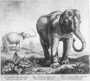 Elephant Hansken Saftleven