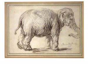 Elephant Hansken Albertina