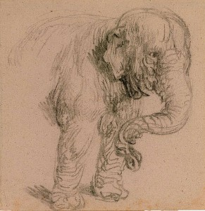 Rembrandt Harmensz. van Rijn, Forequarters of an Elephant - The Morgan Library & Museum-1