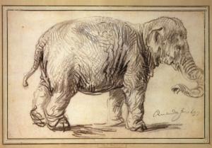 Dit is de olifant waar het allemaal om gaat: Hansken. Getekend door Rembrandt in 1637